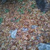 colourful leaves, Touchal