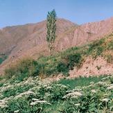 Naser Ramezani, Borj
