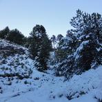 Pine trees with snowflakes, Nevado de Colima