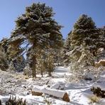 the beauty of the place, Nevado de Colima