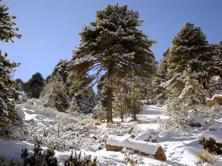 Beautiful place when it snowed, Nevado de Colima