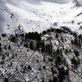 The Pines, Nevado de Colima
