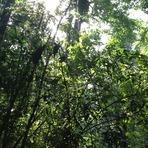 Deep Forest, Gunung Angsi