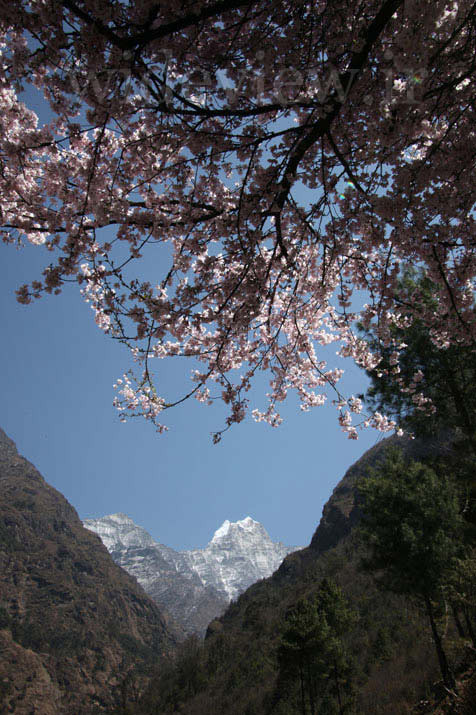 Spring in the Himalayas