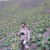 Rivas s flower  shir bad mount, Mount Binalud