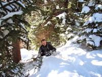 Mount Mitchell Trail in Snow, Mount Mitchell (North Carolina) photo