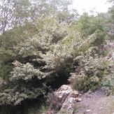 Kolakchal shelter