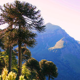 Valle del Naranjo, Lonquimay