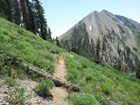Mount Nebo from North Peak Trail photo