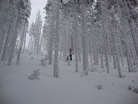 Skrzyczne - among the trees photo