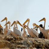 naser ramezani : wild life of urmieh lake, Sahand