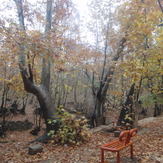 charming forest, Ghalat
