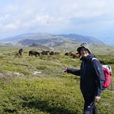s mile, on Trem, with wild horses, Trem - Suva planina