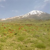 Damavand peak and Shaghayegh flowers, دماوند