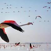 naser ramezani ormieh lake, Sahand