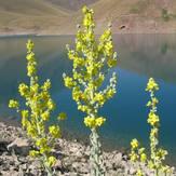 naser ramezani taar lake, Damavand