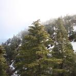 Mount Baldy, Mount San Antonio