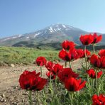 fl of damavand