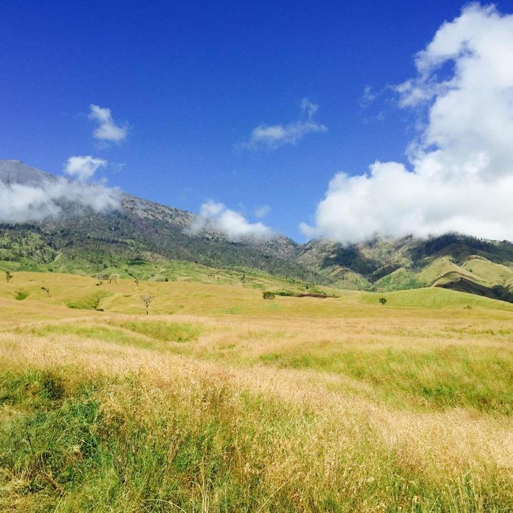 savana on sembalun rute, Mount Rinjani