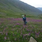 Flowers-1-Yaylalar Valley, Kaçkar Dağı or Kackar-Dagi