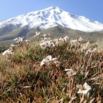 Damavand north face