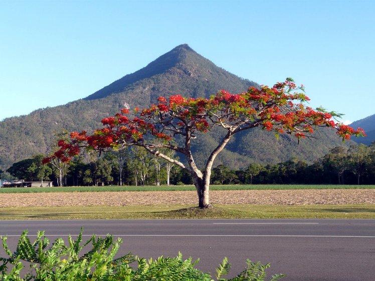 Walsh's Pyramid behind Flame Tree, Walsh's Peak