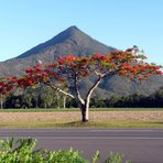 Walsh's Pyramid behind Flame Tree, Walsh's Peak