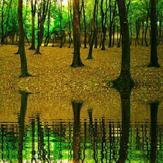 naser ramezani holomeh sar forest, دماوند