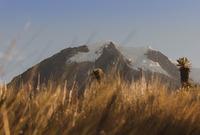 Nevado del Tolima, Azufral photo