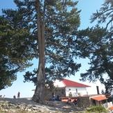 rockstruga refuge, Mount Olympus