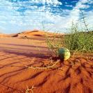 naser ramezani Loot desert