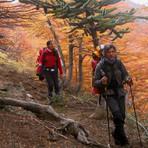 trekking en otoño, Volcan Lanin