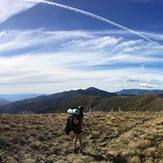 Razorback to Summit, Mount Feathertop