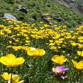 naser ramezani laloon valley, Borj