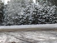 Snowfall 25 June 2016, Mount Donna Buang photo
