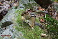naser ramezani good day for chipmunk, Skoki Mountain photo