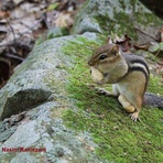naser ramezani good day for chipmunk, Skoki Mountain