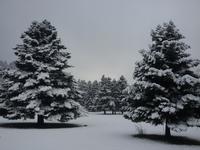 arvanitsa, Mount Helicon photo
