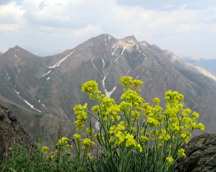 Kharsang, Borj