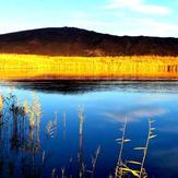 naser ramezani Gavkhooni wetland, Sofeh