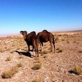 naser ramezani baadrood desert, Karkas
