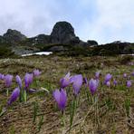 Spring @ Mt Babin Zub