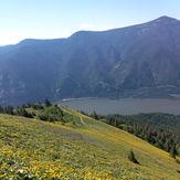 Spring flowers on Dog, Dog Mountain