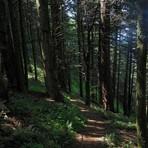 Augspurger Trail #2, Dog Mountain