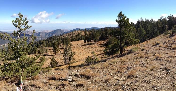 Mt. Pinos Summit Facing NE, Mount Pinos