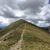 Last stretch on Bull of the Woods Trail, Wheeler Peak