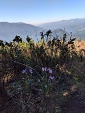 fall flowers from the summit, Dog Mountain photo