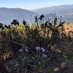 fall flowers from the summit, Dog Mountain