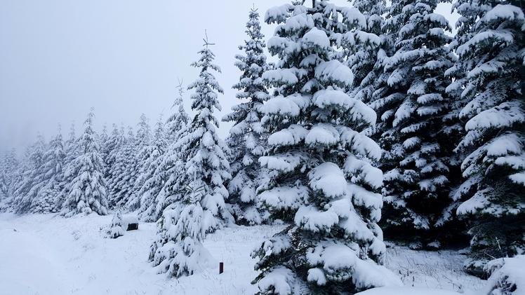 Snowy trees, Marys Peak
