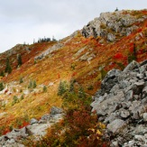 Fall colors, Silver Star Mountain (Skamania County, Washington)